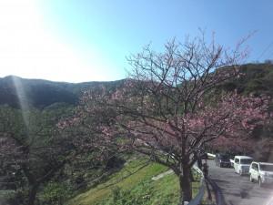 八重岳 (1)