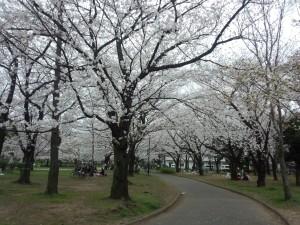 東綾瀬公園 (1)