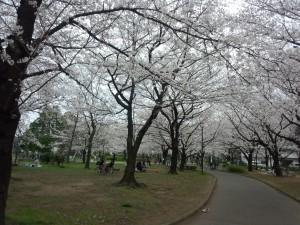 東綾瀬公園 (2)