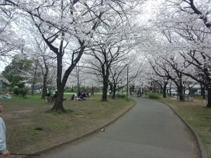 東綾瀬公園 (3)