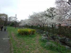 東綾瀬公園 (4)