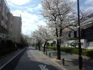 東京武道館 横