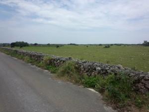 牧場 (2)