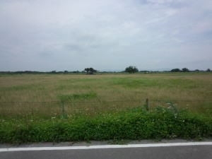 牧場 (4)