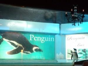 ペンギンバー フェアリー (1)