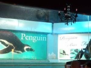 ペンギンバー フェアリー (2)