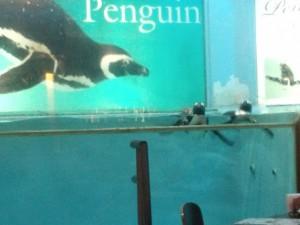 ペンギンバー フェアリー (3)