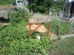 うるり 無農薬菜園