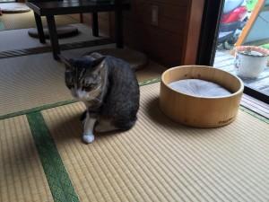 猫丸庵 (4)
